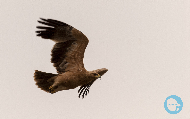 Birdwatching, winter in Doñana
